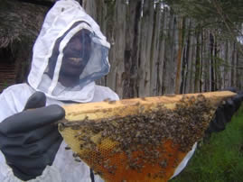 beekeeper_KTBH